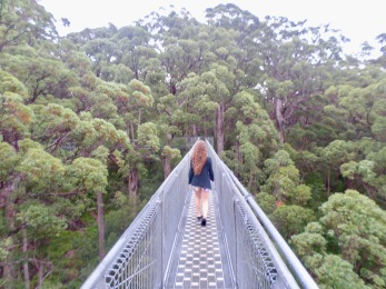 Treetop Walk Valley of Giants