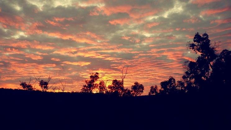 John Forrest National Park