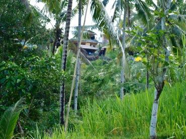 Tegalalang Rice Terrace Bali