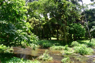Botanical Garden Limbé